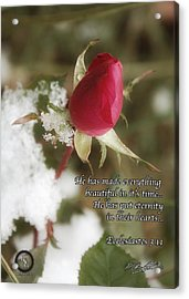 Rose Bud In Snow Acrylic Print