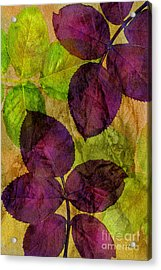 Rose Clippings Mural Wall Acrylic Print by Claudia Ellis