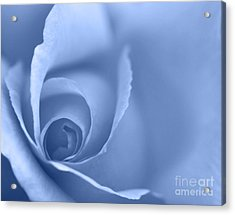 Rose Close Up - Blue Acrylic Print by Natalie Kinnear