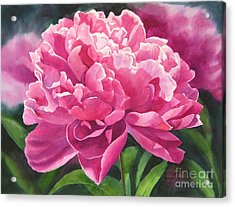 Rose Colored Peony Blossom Acrylic Print by Sharon Freeman