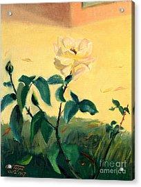 Rose Creme De La Creme Acrylic Print