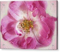 Rose Acrylic Print by Elaine Teague