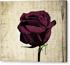 Rose En Variation - S11bt10b Acrylic Print by Variance Collections