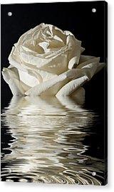 Rose Flood Acrylic Print by Steve Purnell