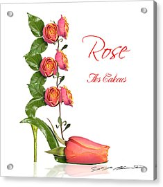 Rose Flos Calceus Acrylic Print by Blanchette Photography