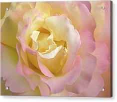 Rose Flower Parfait Acrylic Print