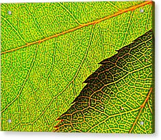 Rose Foliage Number Two Acrylic Print by Chris Berry