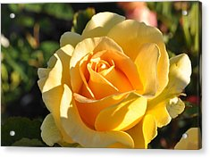 Acrylic Print featuring the photograph Rose - Honey Bouquet by Sabine Edrissi