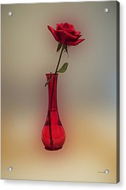 Rose In A Vase Acrylic Print by Thomas Woolworth