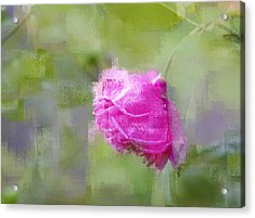 Acrylic Print featuring the photograph Rose In Pink by Linde Townsend
