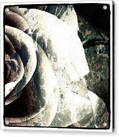 Rose In Retro Acrylic Print