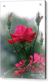 Rose In The Fogg Acrylic Print by Yumi Johnson