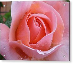 Acrylic Print featuring the photograph Rose In The Rain by Lingfai Leung