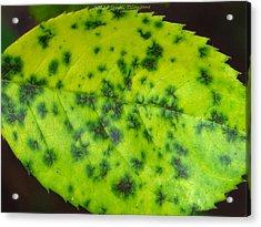 Rose Leaf Acrylic Print by Sonali Gangane