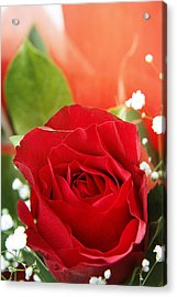 Rose Acrylic Print by Les Cunliffe