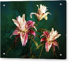 Acrylic Print featuring the photograph Rose Lily Number Three by Bob Coates