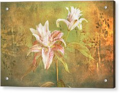 Acrylic Print featuring the photograph Rose Lily Silk by Bob Coates