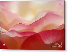 Rose Mountain Acrylic Print