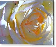 Rose Acrylic Print by N S