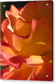 Rose Of Light Acrylic Print by Lucy Howard