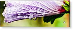 Acrylic Print featuring the photograph Rose Of Sharon by Cathy Donohoue