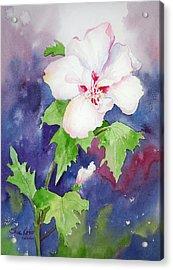Rose Of Sharon Acrylic Print by Sue Kemp