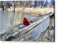 Acrylic Print featuring the photograph Rose On A Bridge by Verana Stark