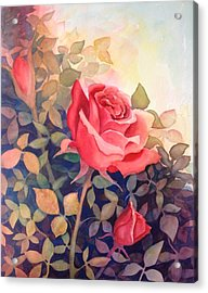 Rose On A Warm Day Acrylic Print by Marilyn Jacobson