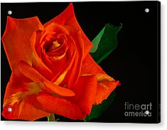 Rose On Fire Acrylic Print by Art Barker