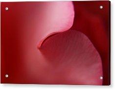 Rose Petal Acrylic Print by Carol Welsh