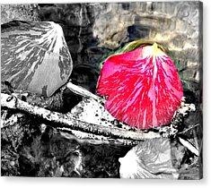 Rose Petal Creek Acrylic Print