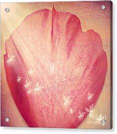 Rose Petal Acrylic Print by Svetlana Sewell