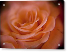 Rose Petals Acrylic Print by Kim Lagerhem