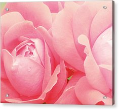 Rose Photography Pink Roses Pink Flower Photography Baby Girl Nursery Art Soft Girly Pink Wall Art Acrylic Print