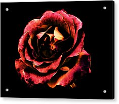 Rose Red Acrylic Print by Persephone Artworks