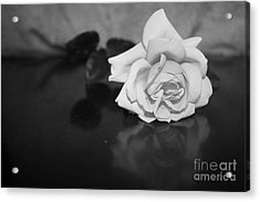 Rose Reflection Acrylic Print