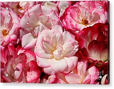 Rose River Acrylic Print by Jeanette French