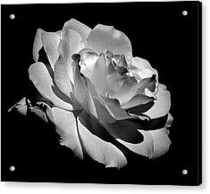 Rose Acrylic Print by Rona Black