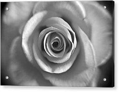 Rose Spiral 4 Acrylic Print by Kim Lagerhem