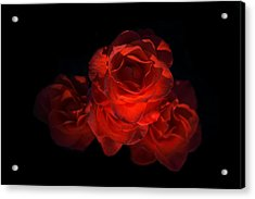 Acrylic Print featuring the photograph Rose Three by David Andersen
