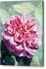 Watercolor Of A Pink Rose In Full Bloom Dedicated To Van Gogh Acrylic Print