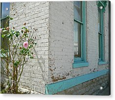 Rose White Blue House Acrylic Print by Kathy Barney