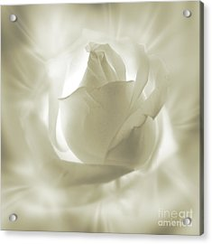 Rose With Glow Acrylic Print