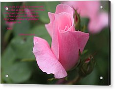 Rose With Scripture Acrylic Print by Carolyn Ricks