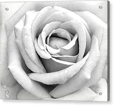 Rose With Tears Acrylic Print by Sabrina L Ryan