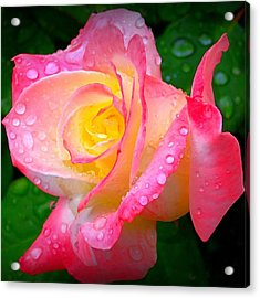Rose With Water Droplets  Acrylic Print by Nick Kloepping