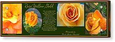Rose Yellow Gold Plus Acrylic Print by Brooks Garten Hauschild