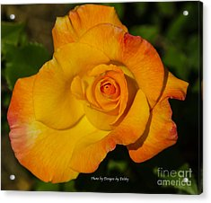 Acrylic Print featuring the photograph Rose Yellow Red by Debby Pueschel