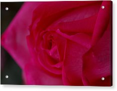 Rose6 Acrylic Print by Kennith Mccoy