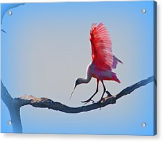 Acrylic Print featuring the photograph Roseate Spoonbill by David Mckinney